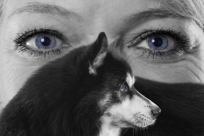 Portraitfotografie-Tierfotografie Mayen